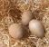 wood wool eggs