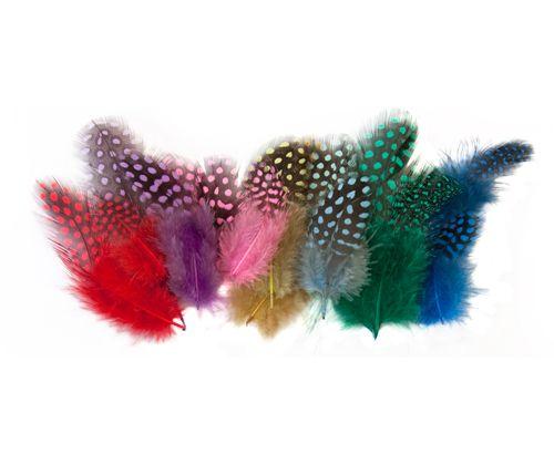 Guinea Fowl Feathers assorted colours