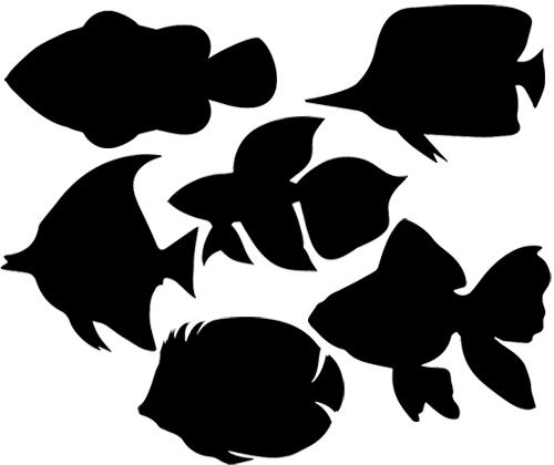 Scratch Fish 24 pack