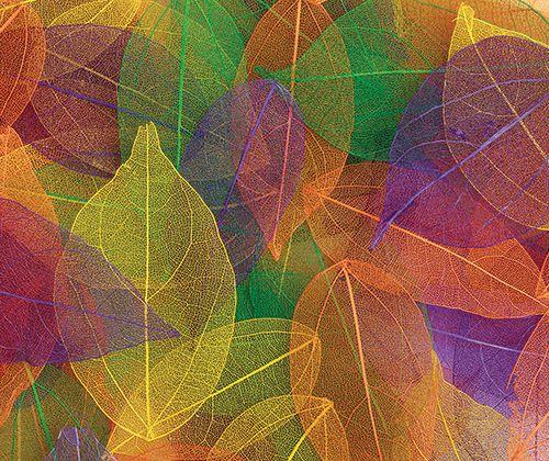 Skeleton Leaves Coloured 100 pack