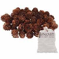 Discovery Mini Pine Cones 190g