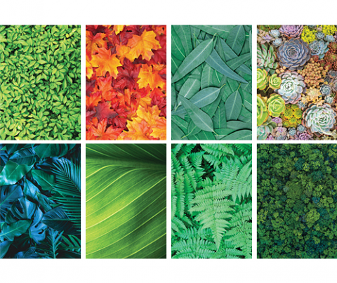 Pattern Papers A4 40pack Foliage
